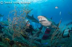 Shark082.JPG