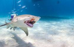 Shark001.JPG