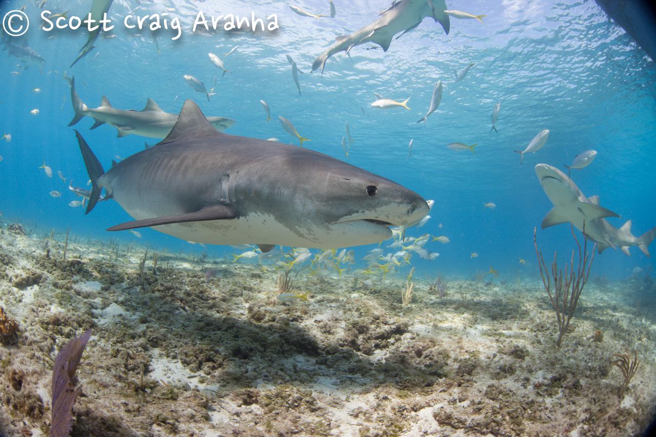 Shark041.JPG
