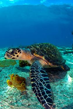 Turtles003.jpeg