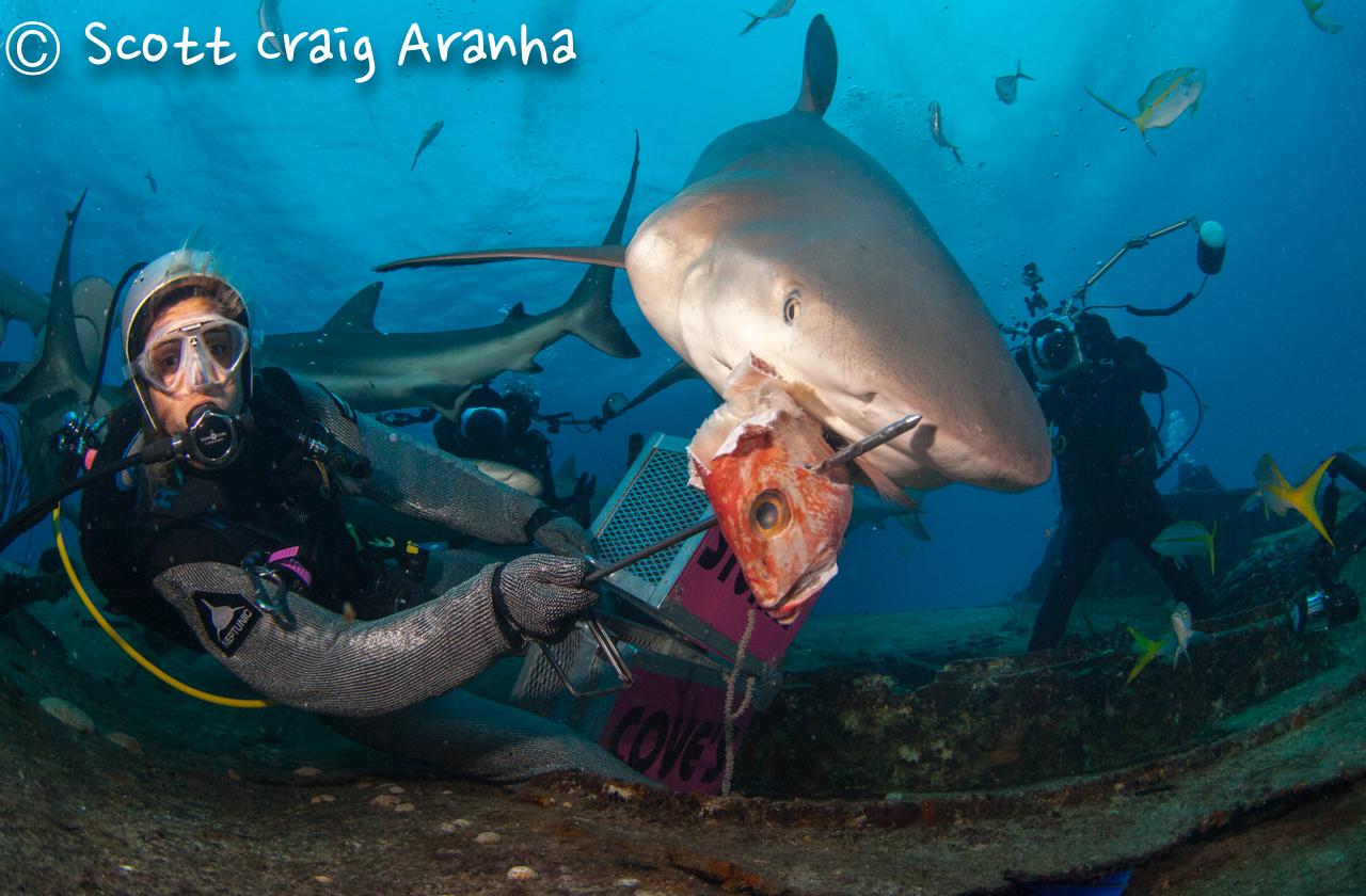Shark087.JPG