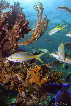 Wreck and Reef021.JPG