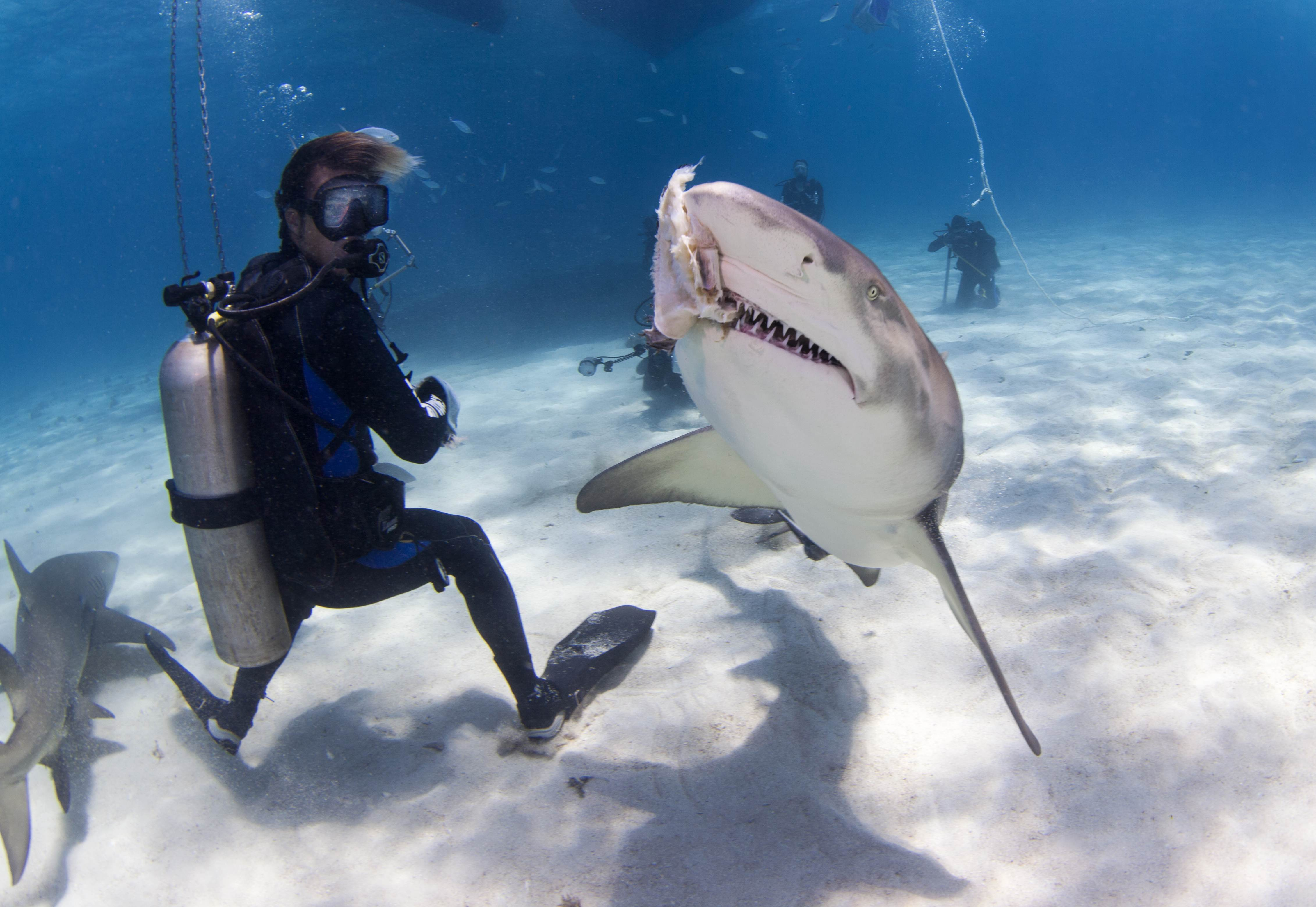 Shark004.JPG