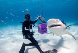 Shark013.JPG