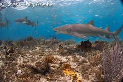 Shark025.JPG