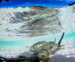 Turtles014.jpeg
