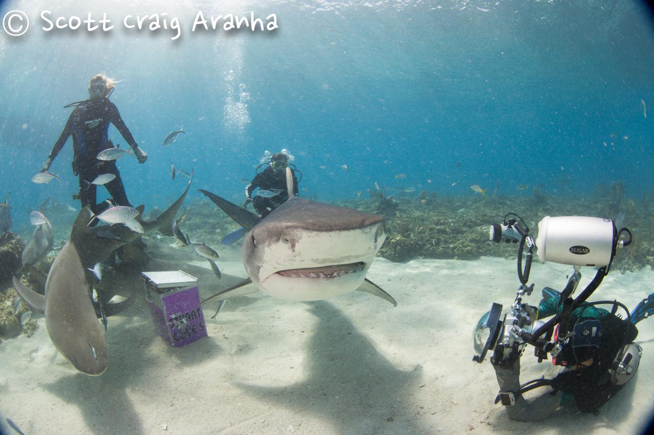 Shark048.JPG