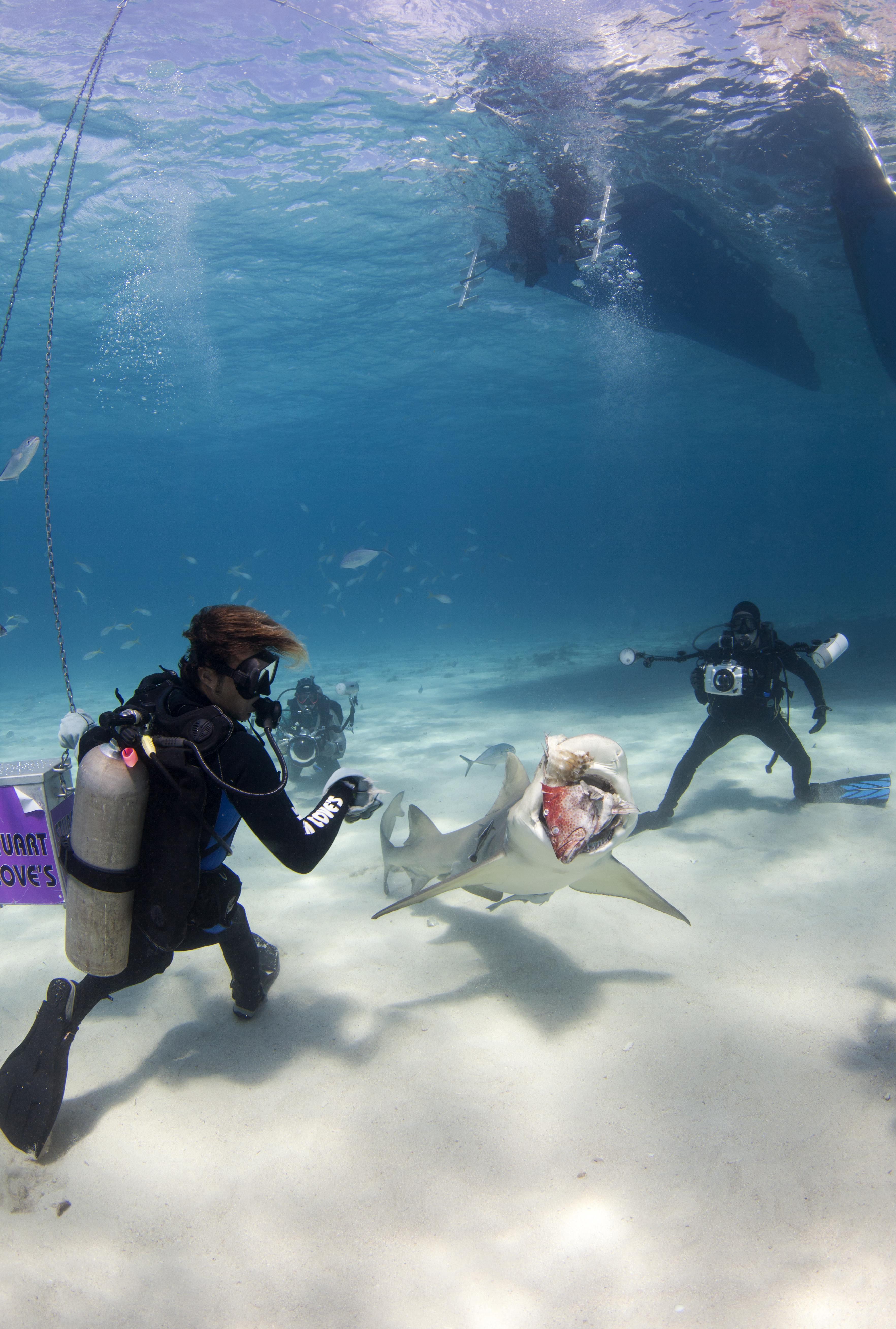 Shark008.JPG