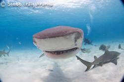 Shark033.JPG