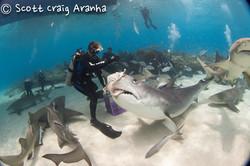 Shark030.JPG