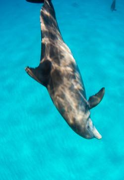 Dolphin005.jpeg