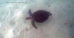 Turtles007.jpeg