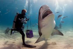 Shark016.JPG
