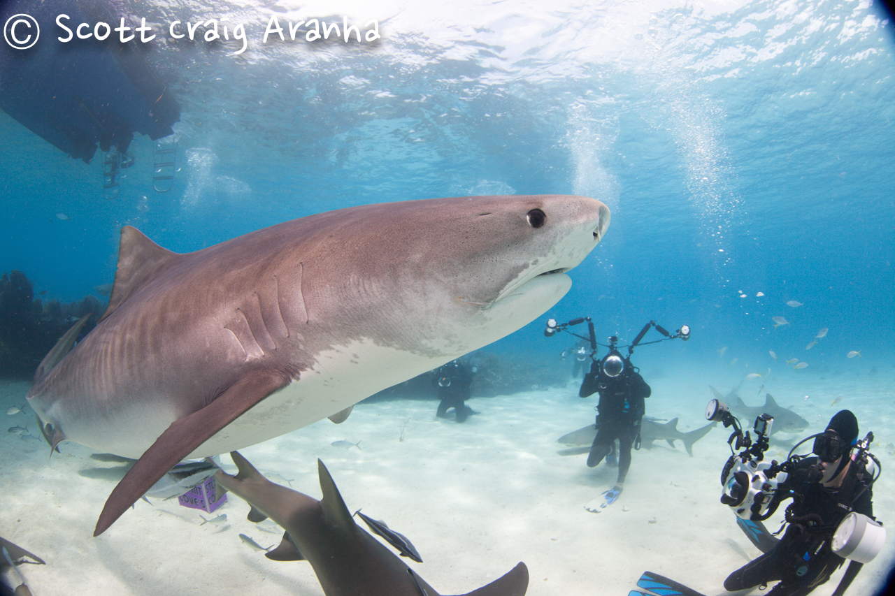 Shark029.JPG