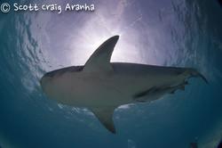 Shark024.JPG