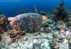 Turtles054.jpeg