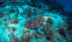 Turtles052.jpeg