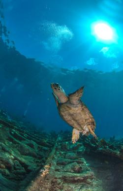 Turtles001.jpeg