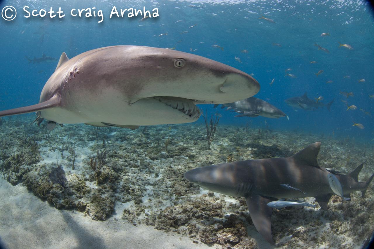 Shark037.JPG