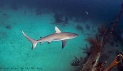 Shark092.JPG