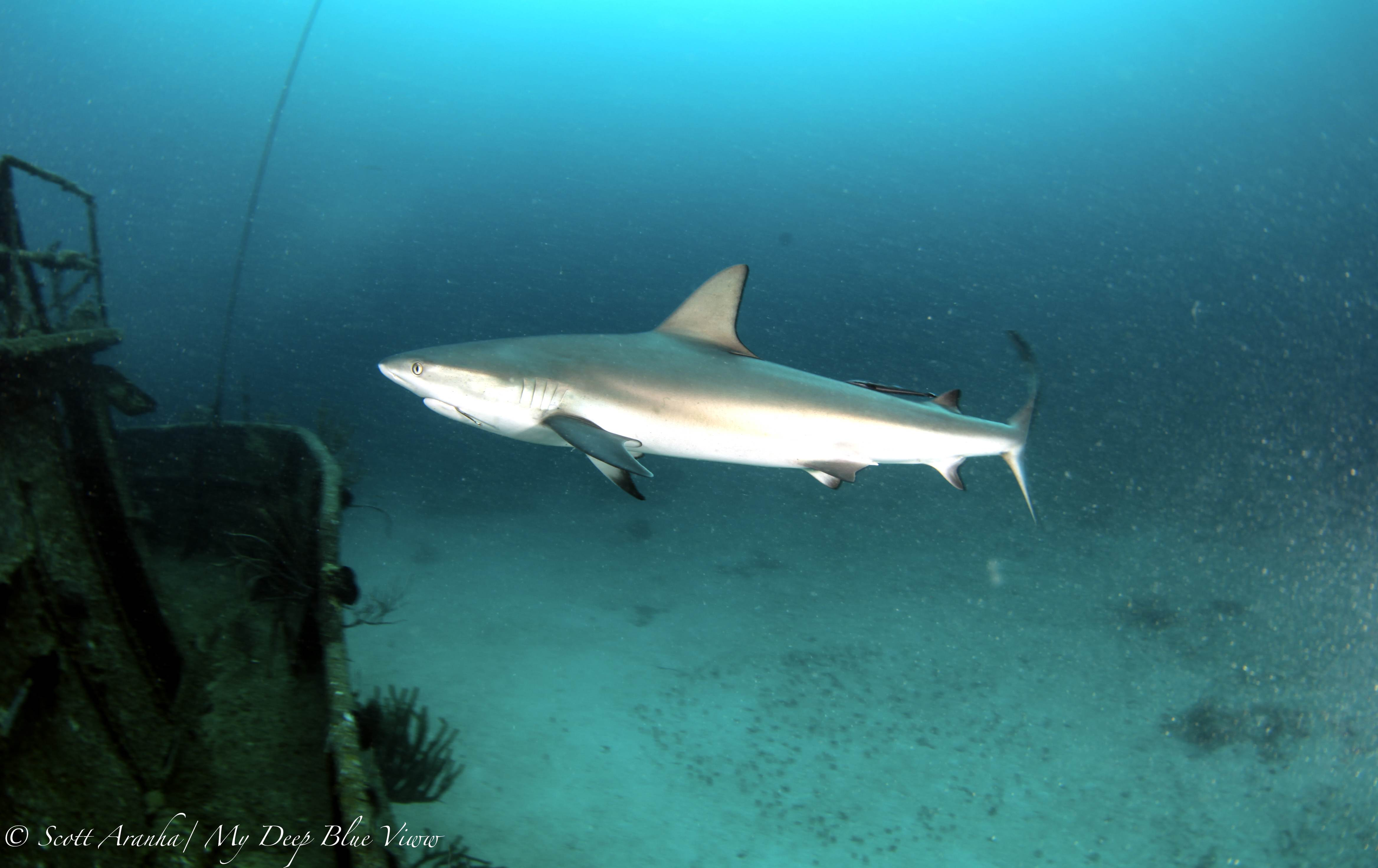 Shark097.JPG