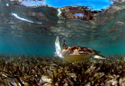 Turtles039.jpeg
