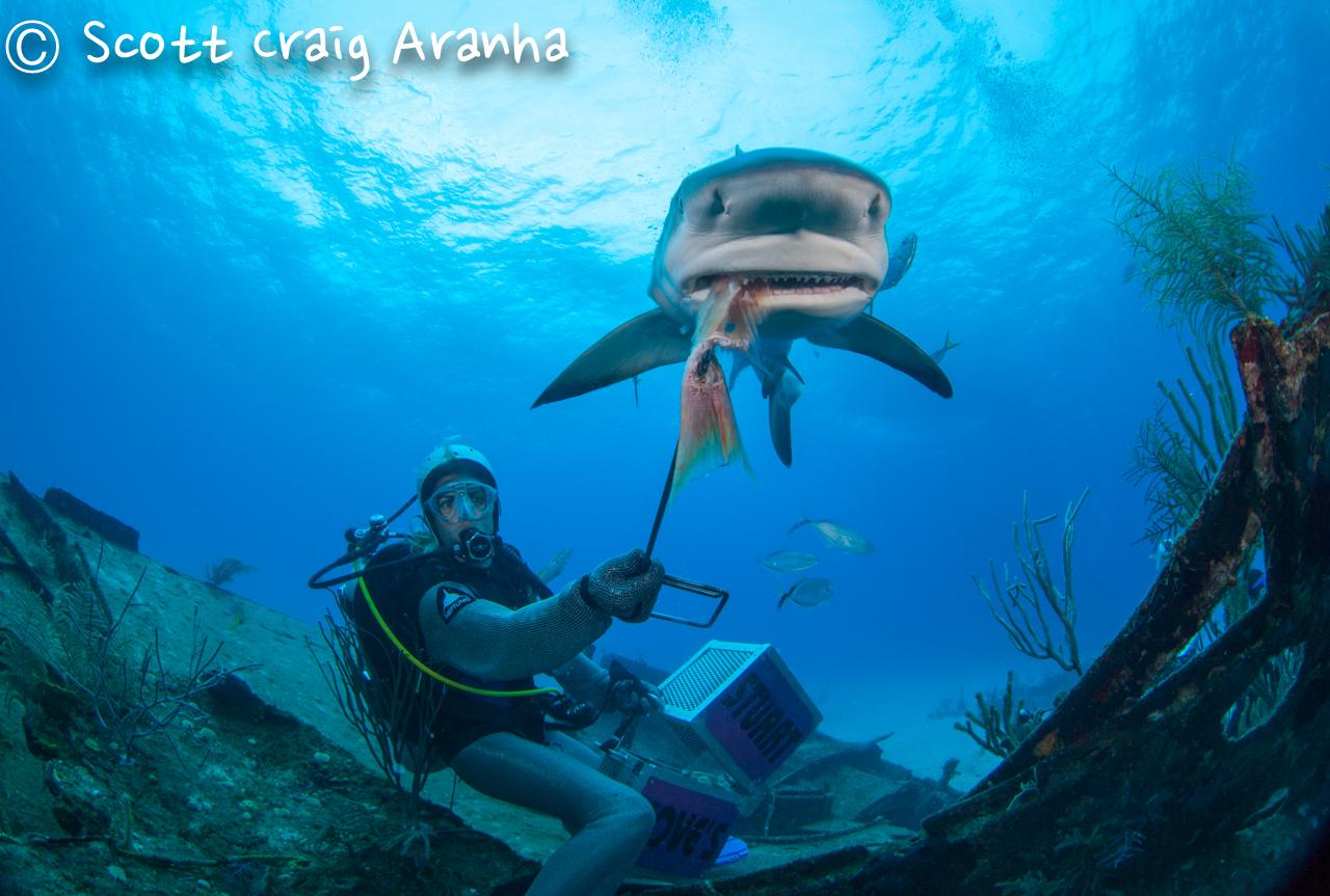 Shark079.JPG