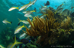 Wreck and Reef023.JPG