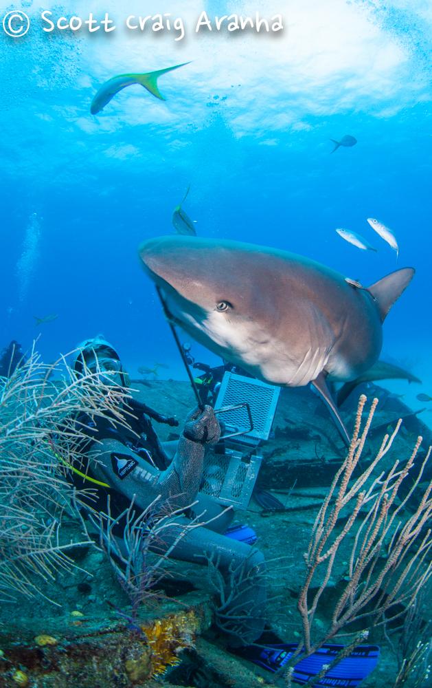 Shark083.JPG