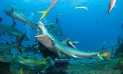 Shark066.JPG