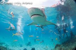 Shark019.JPG