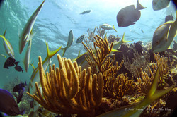 Wreck and Reef025.JPG