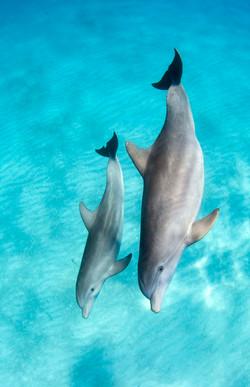 Dolphin003.jpeg
