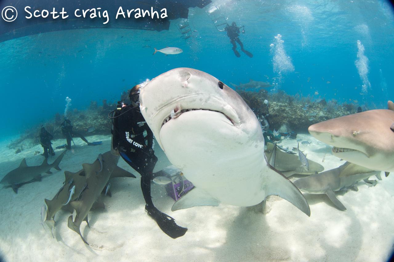 Shark031.JPG