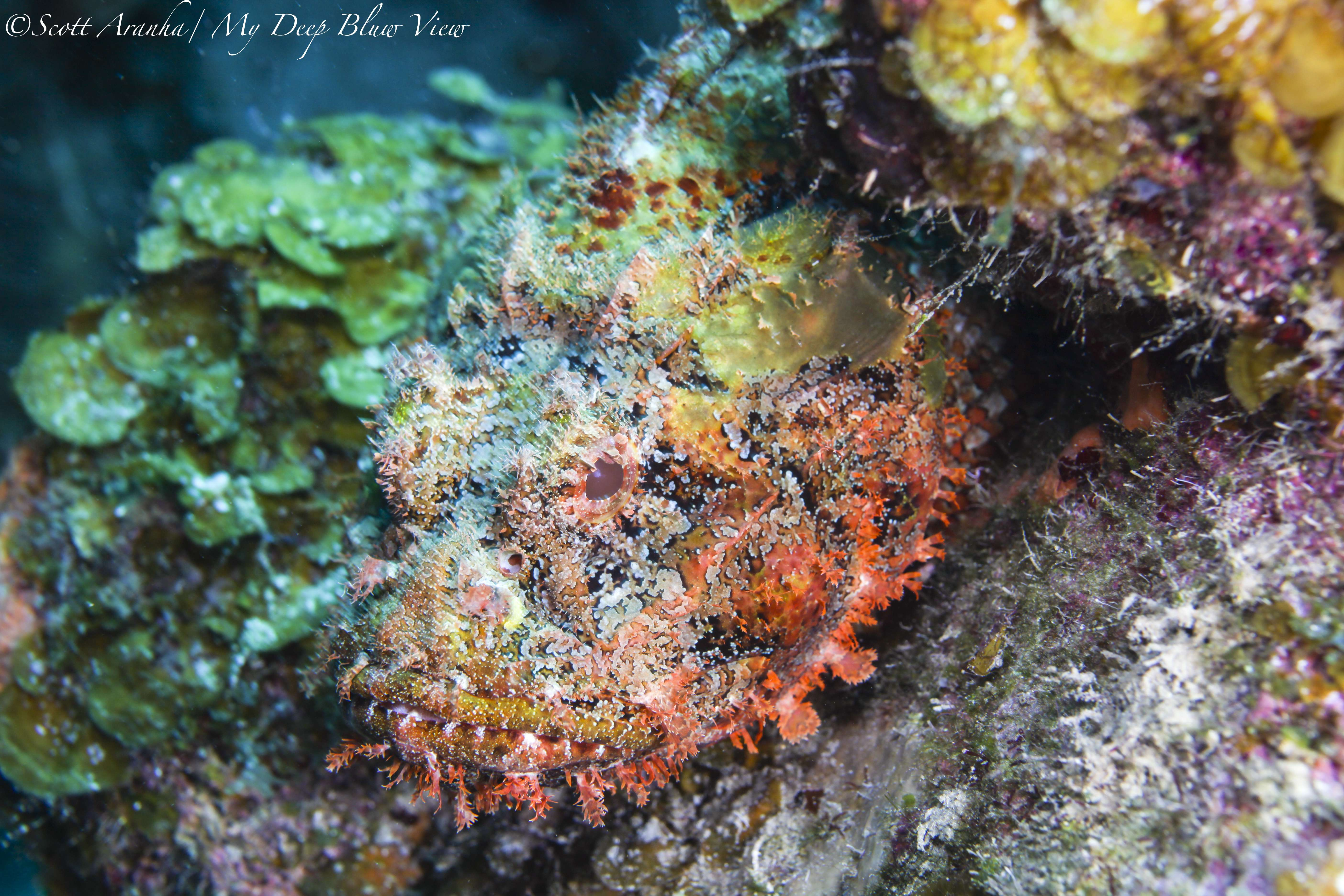 Wreck and Reef027.JPG