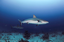 Shark104.JPG