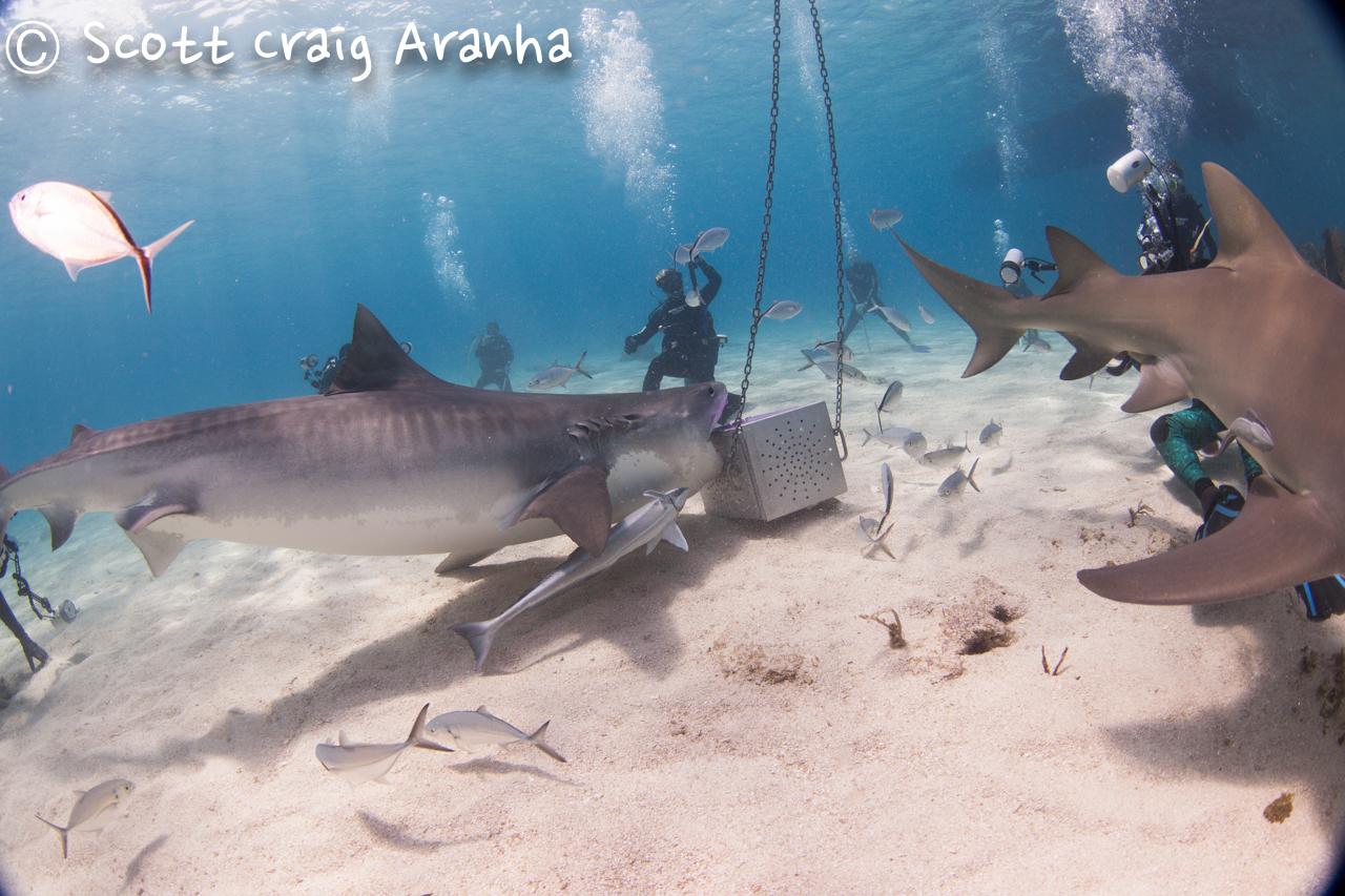 Shark023.JPG