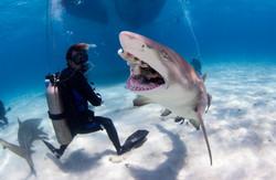 Shark005.JPG