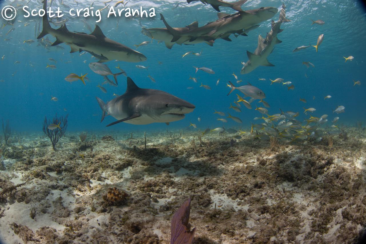 Shark040.JPG