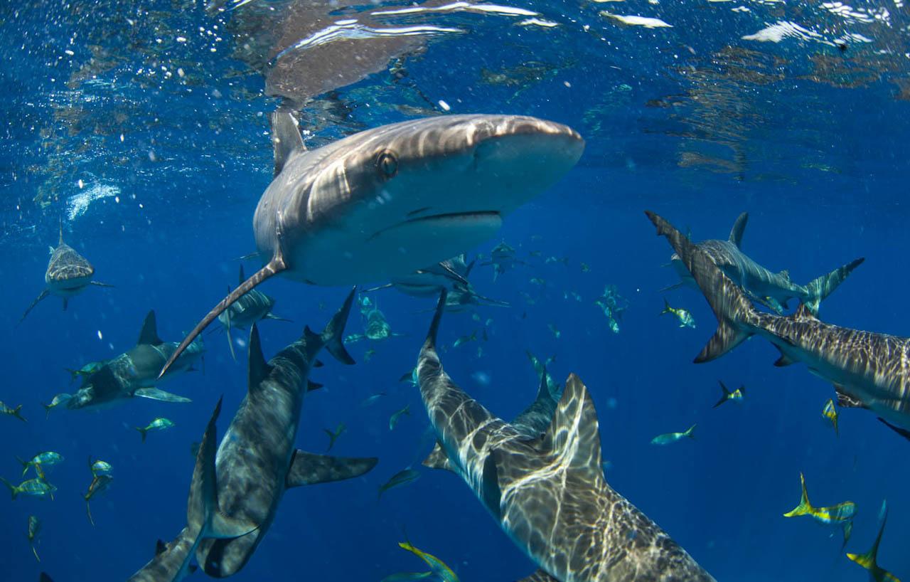 Shark058.JPG