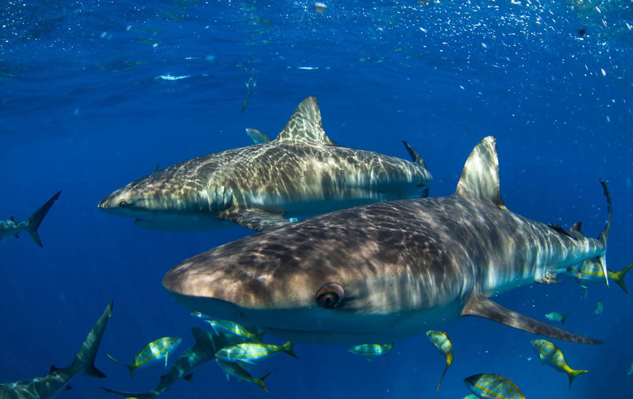 Shark061.JPG