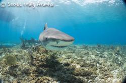 Shark045.JPG