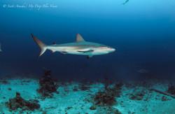 Shark103.JPG