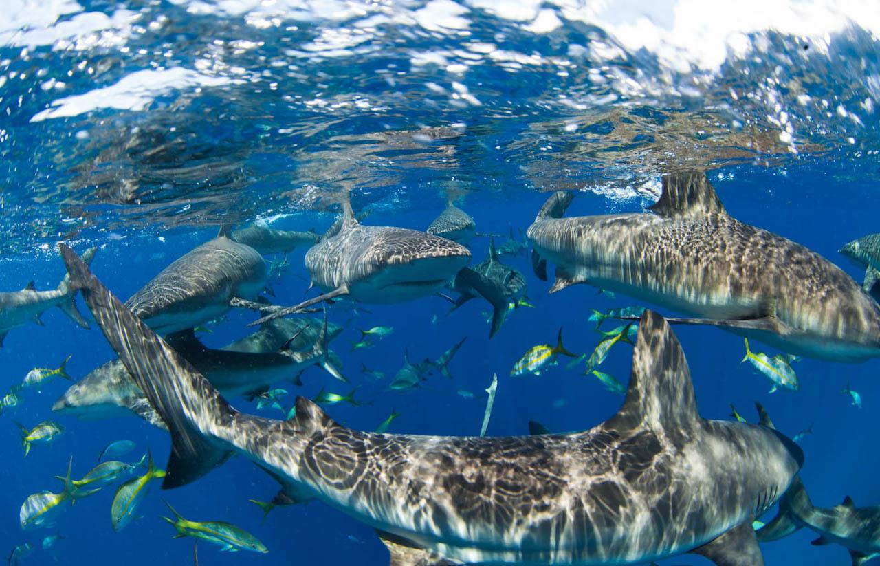 Shark060.JPG