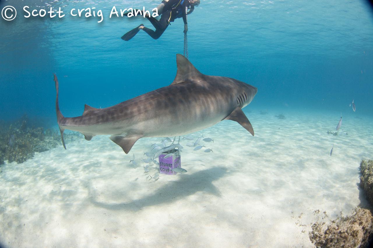 Shark047.JPG