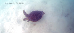 Turtles009.jpeg
