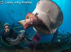 Shark088.JPG