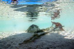 Turtles025.jpeg