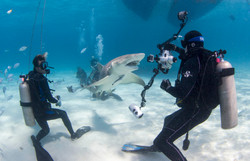 Shark009.JPG
