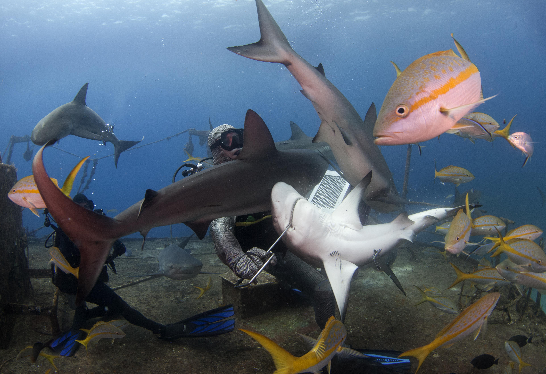 Shark073.JPG
